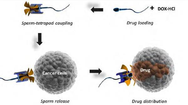 Tubes de lutte érotiques