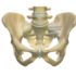 PrinterPrezz to provide SI-BONE with 3D-printed medical devices and implants