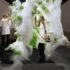 Le Centre Pompidou de Paris expose un bioréacteur imprimé 3D